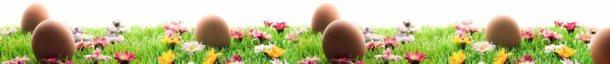 HospitalityZOO Spring Specials
